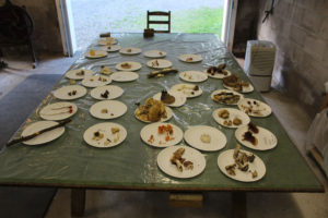 Table 2 included some poisonous mushrooms which we were discouraged from trying.