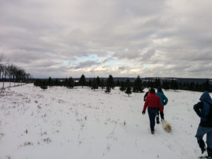 Winter Hike on the All Western Evergreen Farm in beautiful Springwater NY @ Liberty Pole Road